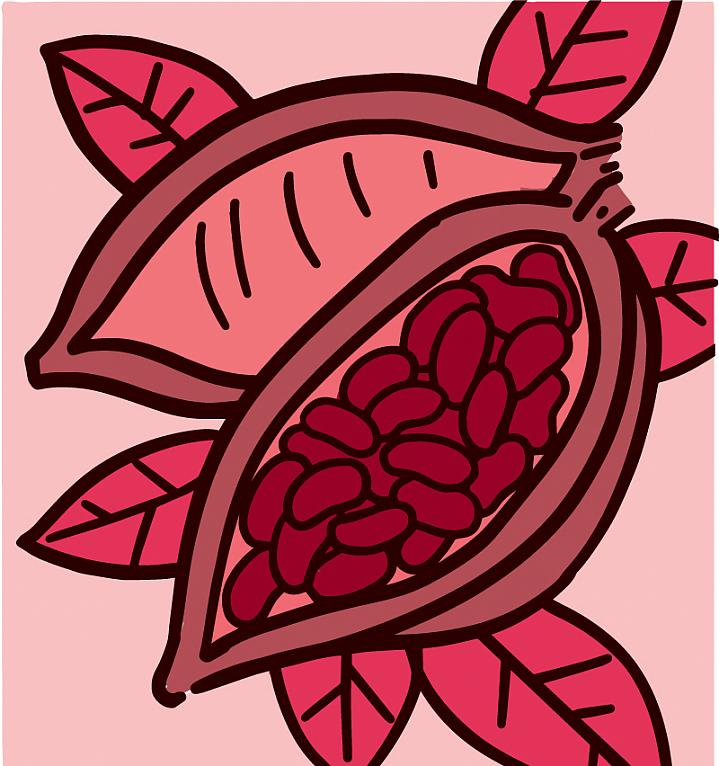 Illustration of a cocoa plant